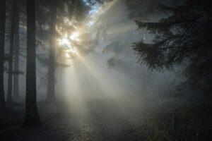 Cómo hacer el triángulo de luz Como su nombre lo indica, el triángulo de iluminación consiste en colocar tres puntos de luz en forma de triángulo y cuya función será complementarse mutuamente. La luz frontal será la principal y expondrá lo que queramos fotografiar, pero sólo con ella se generarán sombras. Por eso tenemos que poner otra fuente de luz en el lado opuesto, con una intensidad más débil. Si la luz principal se coloca más a la derecha, la segunda fuente de luz irá a la izquierda. Y por otro lado, hay que poner una luz de fondo que será la tercera para dar forma a esta triangulación. Servirá como luz de fondo y dará profundidad a la imagen. Las funciones de cada punto de luz Principal. Como hemos mencionado, es la que proporcionará más iluminación a la imagen y por lo tanto la de mayor intensidad. Debe colocarse en un ángulo entre 30 y 45 grados con respecto a la cámara; cuanto mayor sea el ángulo, más resaltarán las texturas. Retroiluminación. La fuente de retroiluminación debe colocarse justo detrás de la escena para ser fotografiada. Se generará una pequeña cantidad de luz alrededor del sujeto y lo separará del fondo. La potencia debe ser débil porque la función principal no es enfocar directamente. Rellenar. Pero es imposible poner una sola luz principal o acompañarla con una luz de contraste y no tener sombras. Por lo tanto, la luz de relleno debe ser colocada para suavizar estas áreas oscuras. ¿Cómo debe colocarse? En un ángulo de 90 grados con respecto al eje de la luz principal con el objeto o sujeto retratado.